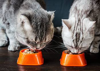 Two cats eating from food bowls