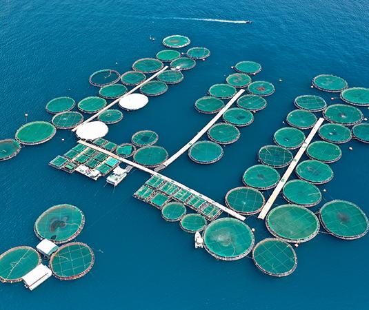 aquaculture fish farm Salmon cages
