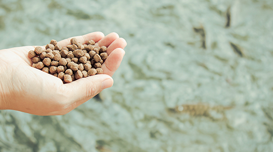 Hand holding fish feed above water
